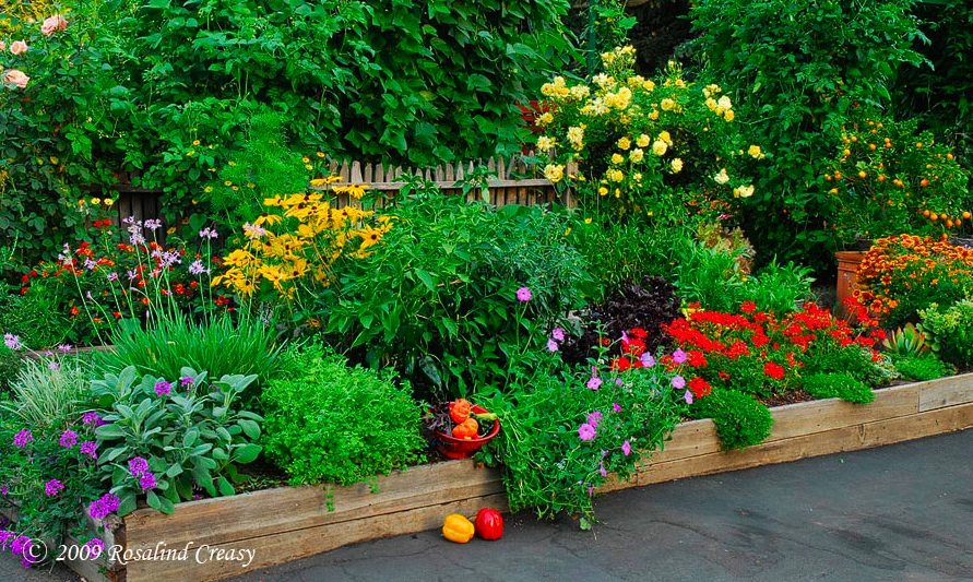 organic, vegetables, edible landscaping, Oak Park, front yard, Bass,