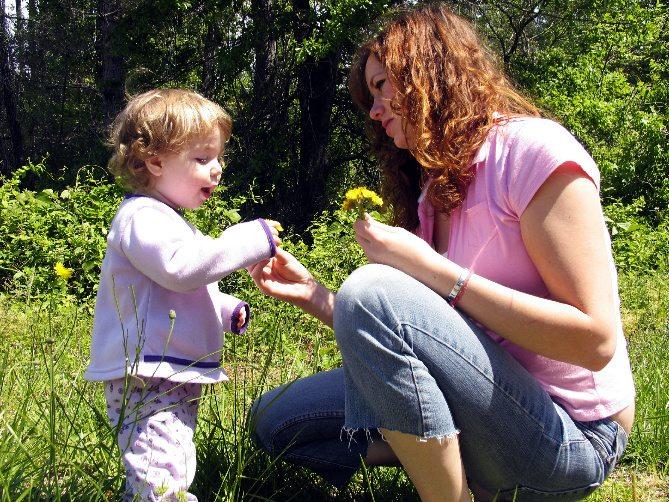 dandelion flower recipe,