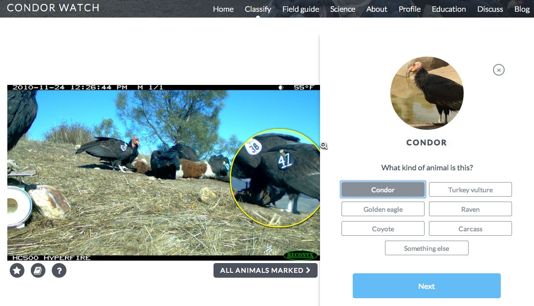 Help tag California condors and other animals on Condor Watch. Screenshot of Condor Watch by Ariane Coffin.
