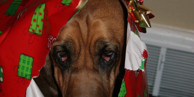 Sad.Hounddog