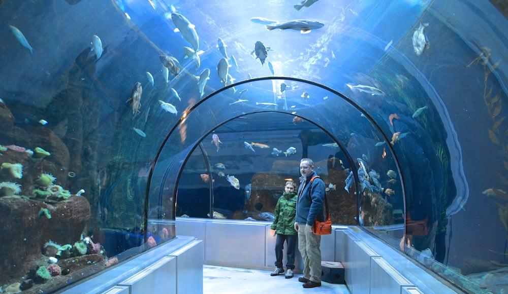 92,000 gallon tank surrounds visitors