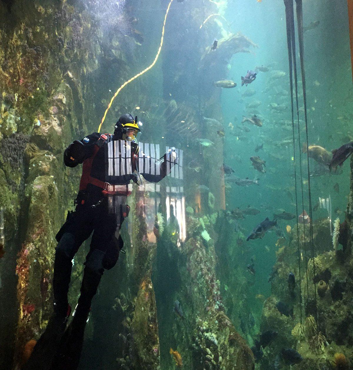 Octonauts-Diver