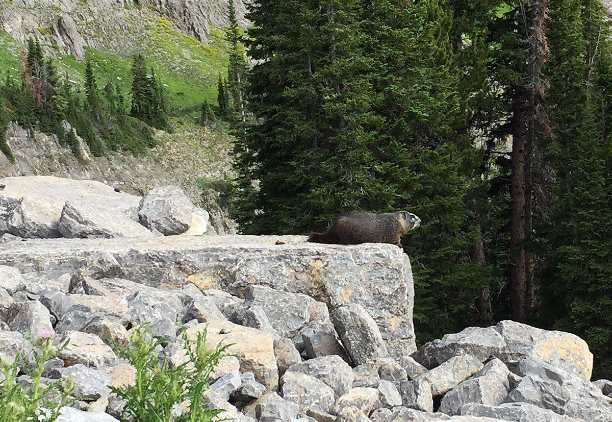 RunCamp-Marmot
