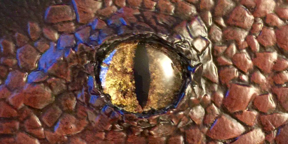 Dragon eye close up