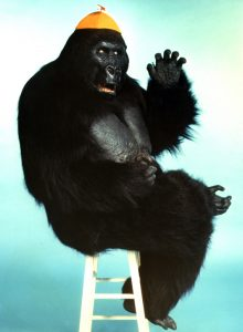 """Tracy the Gorilla, star of the 1975 TV series """"The Ghost Busters"""" Photo courtesy of Bob Burns © 1999 The Bob Burns Collection. All rights reserved."""