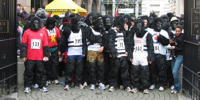 gorilla-run