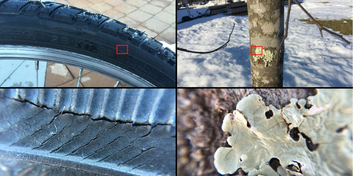 Photo collage showing a bike tire, then a zoomed in section of the tire, and moss on a tree, with a zoomed in shot of the same moss.
