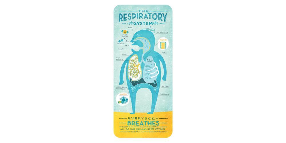 Respiratory_Ignotofsky