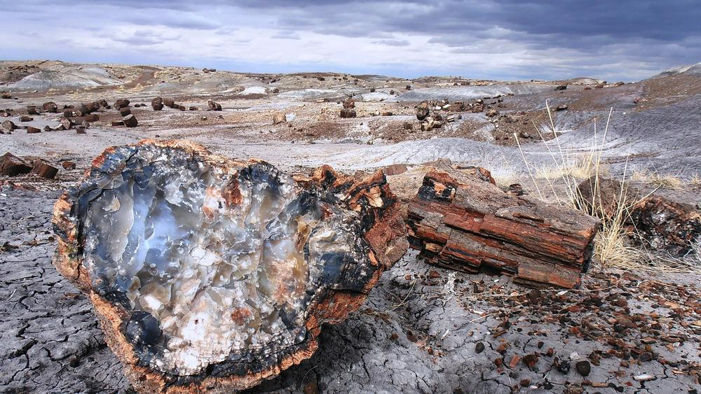Petrified Forest. Image: Public Domain
