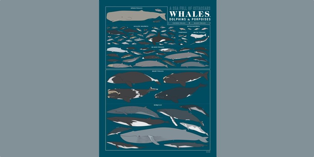 A poster with a porpoise. (Image Credit: Pop Chart Lab)