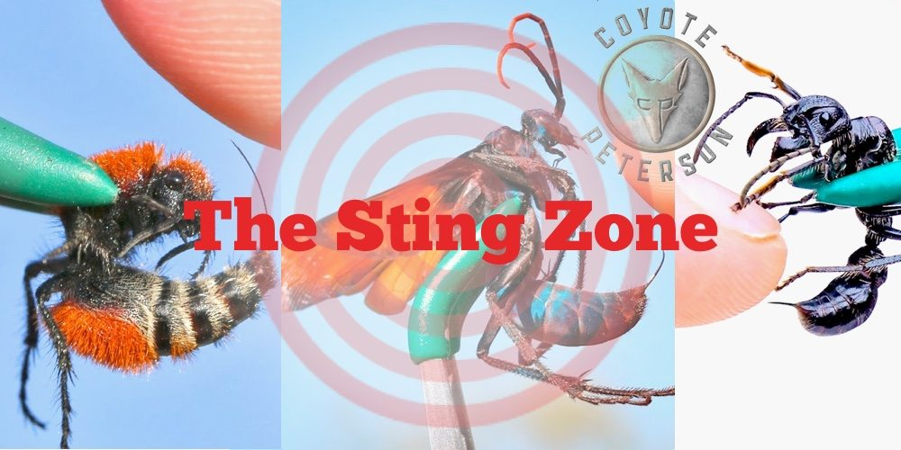 The Sting Zone with Coyote Peterson