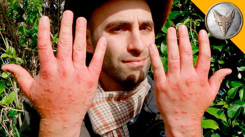 Coyote Peterson Fire Ant Attack