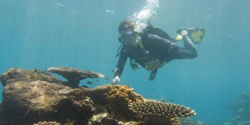 diving pelorus island