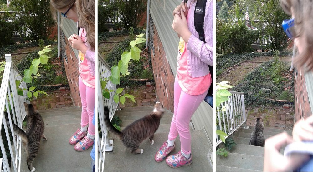 three pictures of the tabby cat taking up residence on the front porch