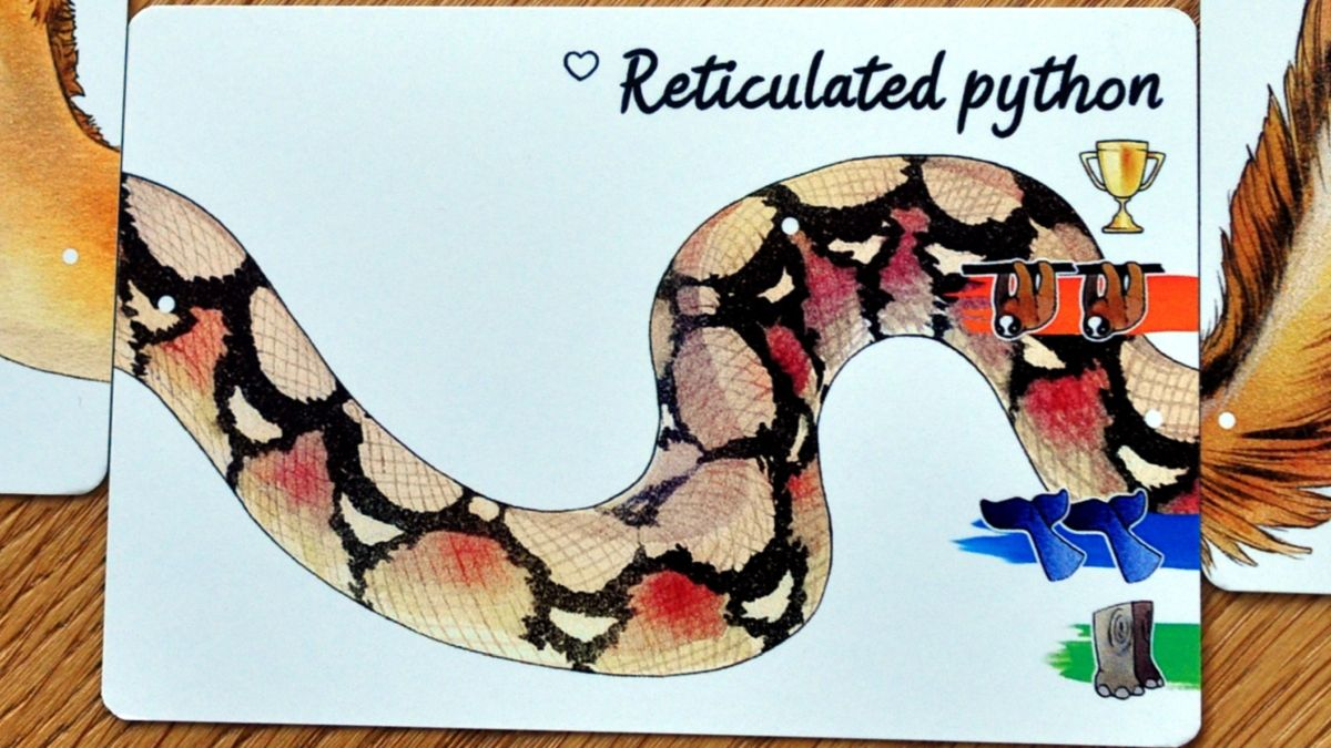 Darwin's Choice Large Animal card: The Reticulated Python