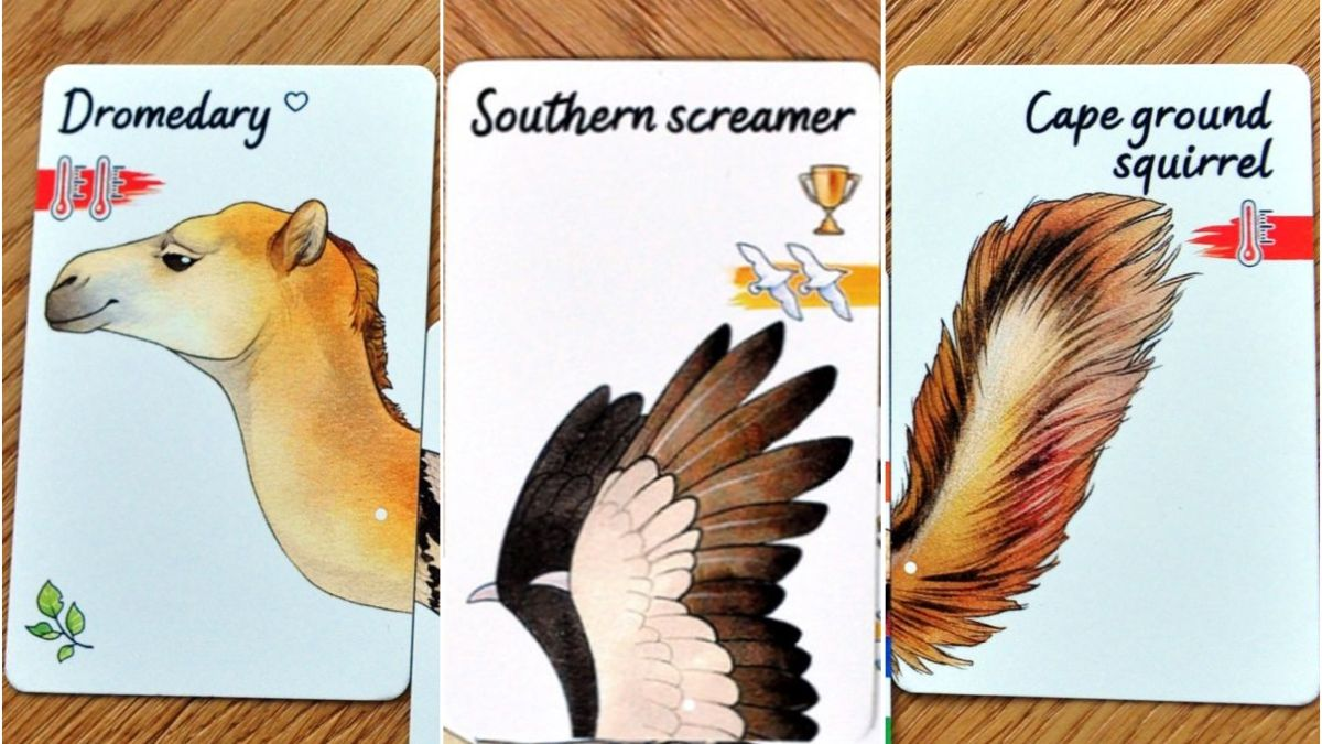 Small animal cards include heads, wings, tails, and single pairs of legs.