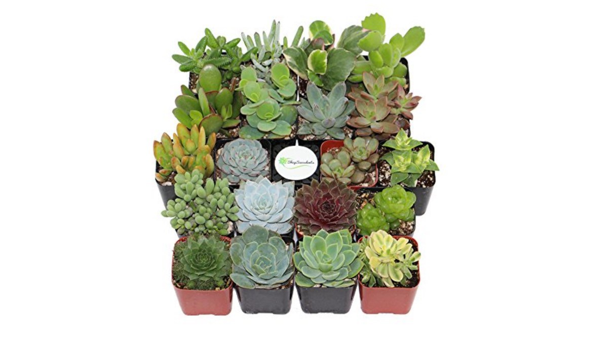 Geek Daily Deals 072318 succulents