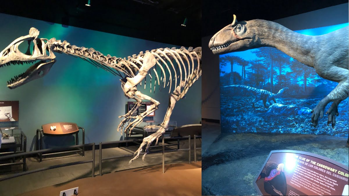 Field-Antarctic-Dinos-Chicago