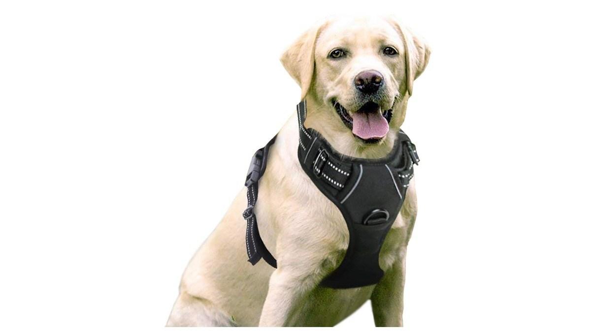 Geek Daily Deals 070719 dog harness