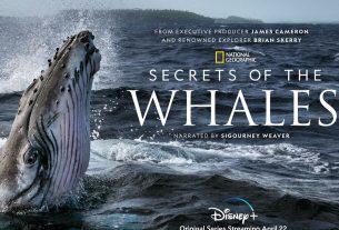Secrets of Whales title