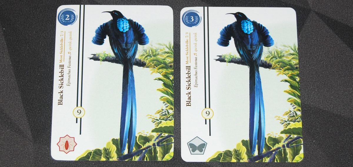 Birdwatcher Blue Sicklebills
