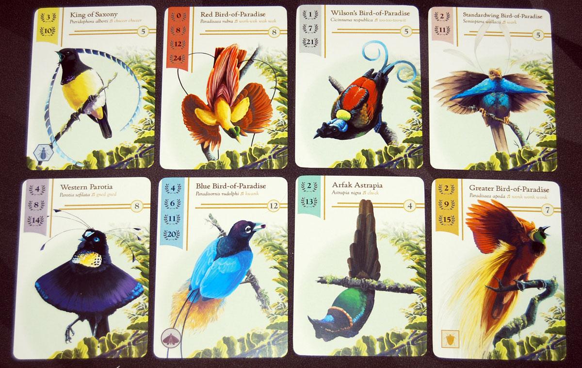 Birdwatcher bird cards