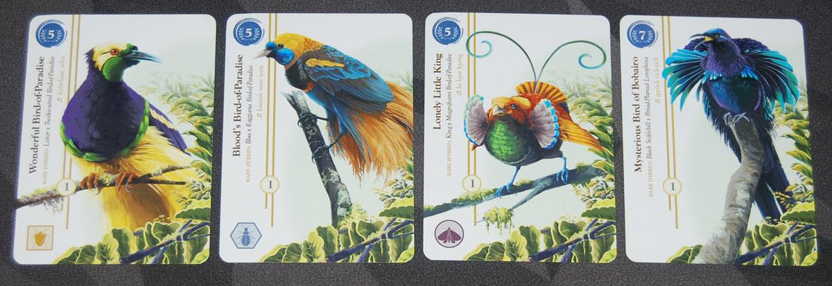 Birdwatcher rare birds